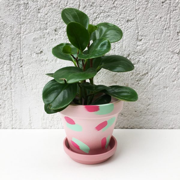 Blush pink plant pot with mint green brush stroke pattern. Colourful pattern indoor plant pot