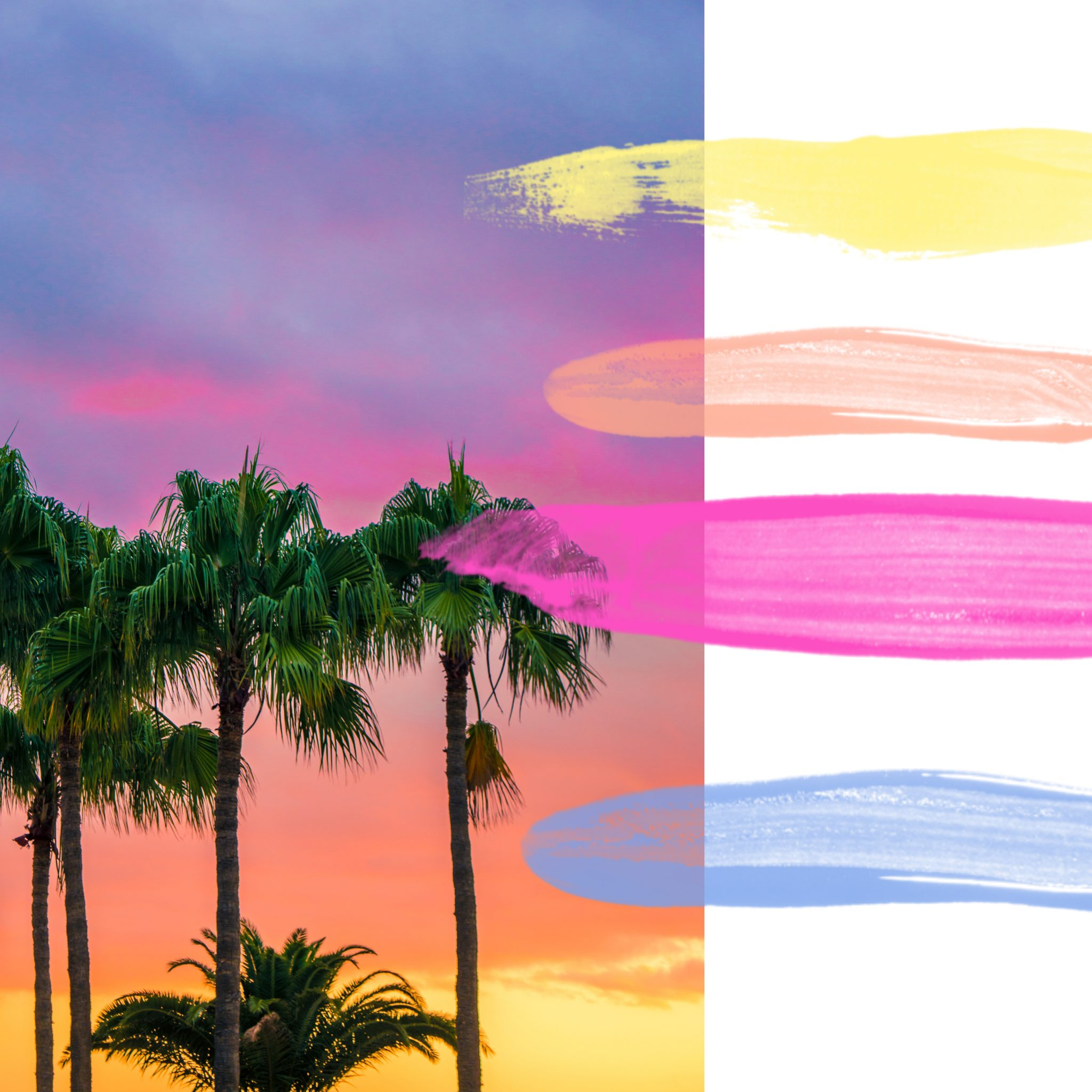 Palm trees on colourful sunset, tropical colour palette
