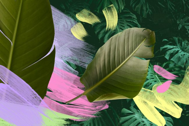 Monstera leaf background with pastel brushstrokes and banana leaf collage by Sara Hoque 2019